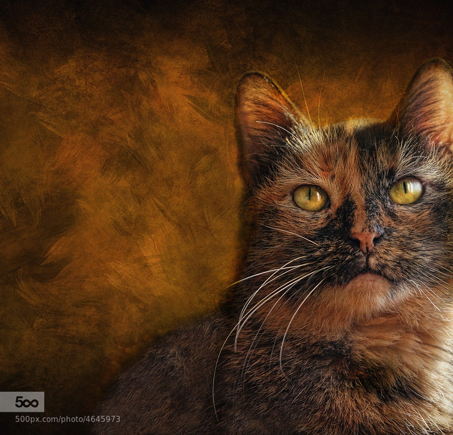 Calico by Pat Abbott