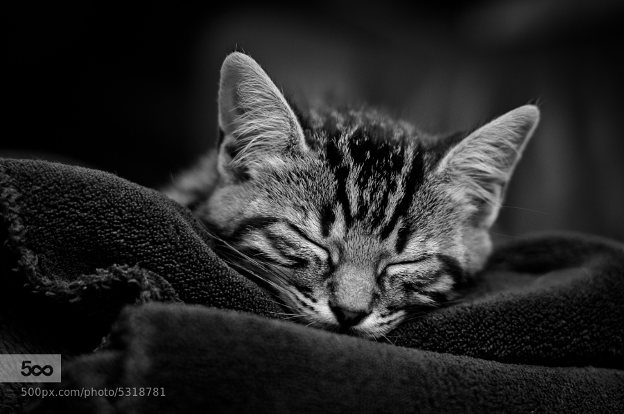 Black & White Dream, by Maxime Gilbert - 900px
