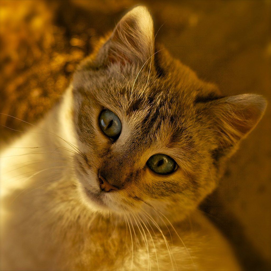 portrait de chat